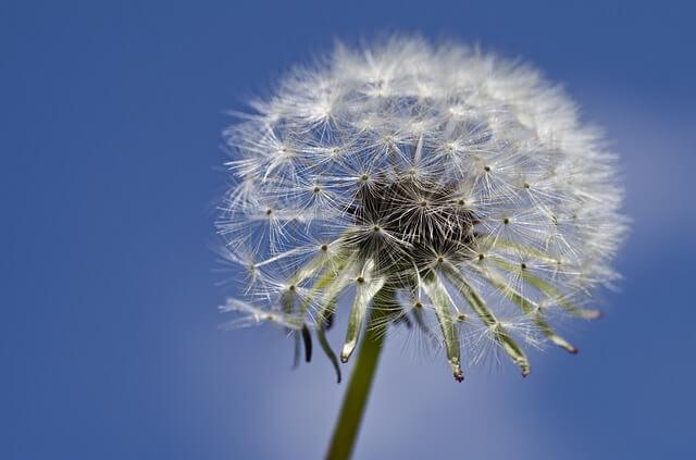 alergias sevilla