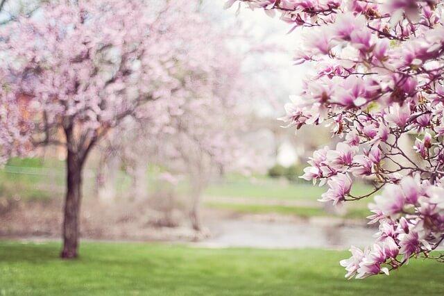 consejos primavera alergias sevilla
