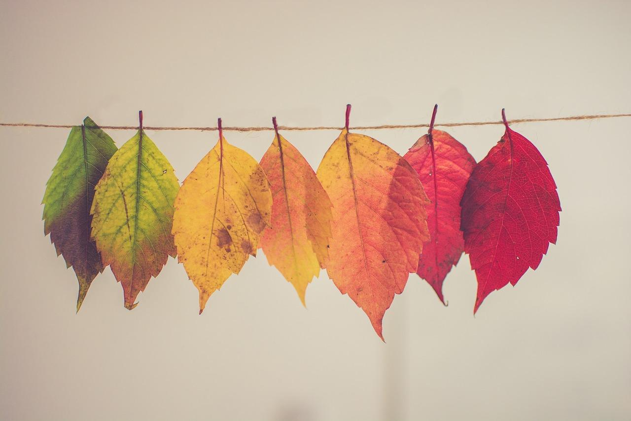 otoño enfermedades